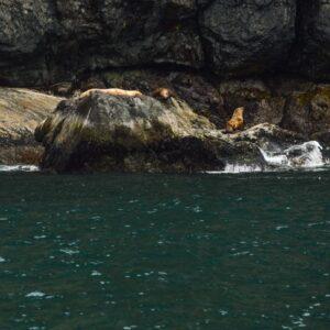 Sea Otters   healthynibblesandbits.com