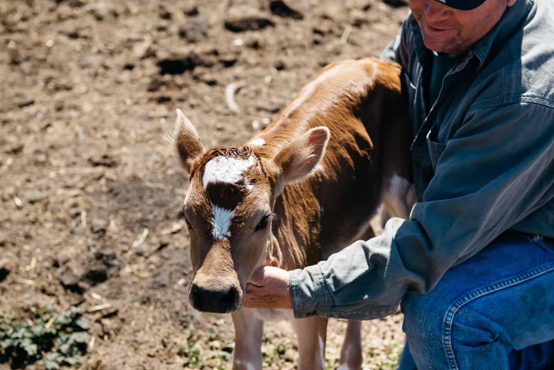 Moretti Dairy Farm